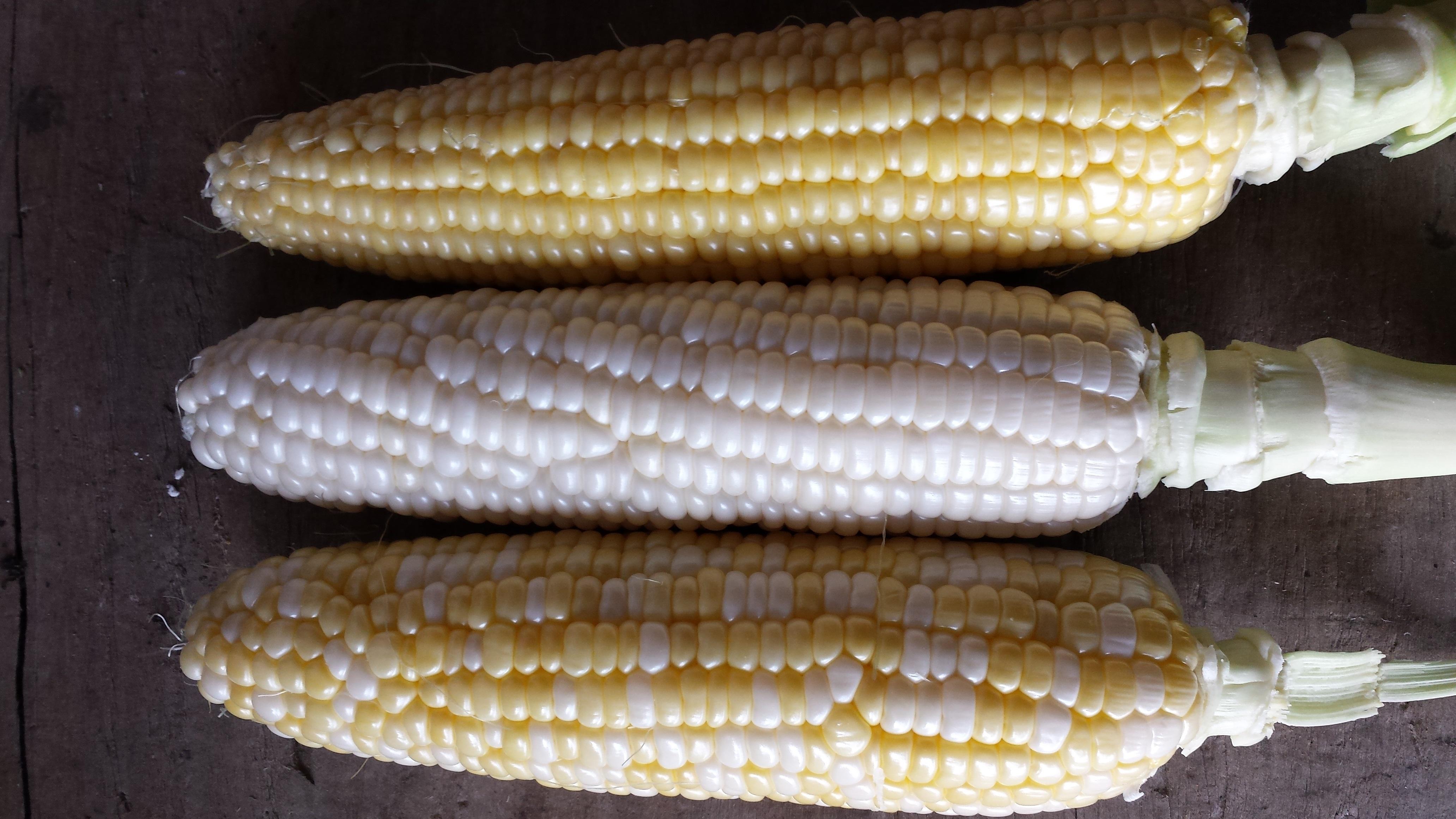 3-corn